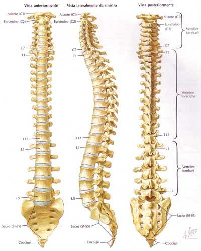 Risultati immagini per ortopedia colonna vertebrale